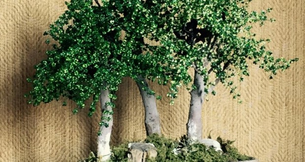 """Bonsai"" in fiore di Lidia Galluffo"